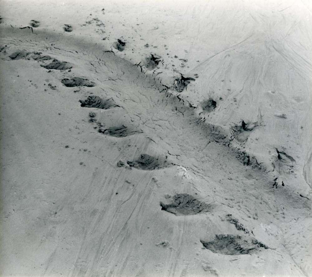 Alfred Ehrhardt, Spur eines Seehundes, 1933-36, Silbergelatineabzug, © Alfred Ehrhardt Stiftung