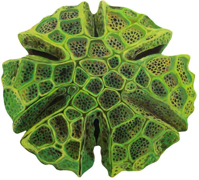 Bärbel Rothhaar: Basilikum-Pollen, Keramik, 2014 © Bärbel Rothhaar