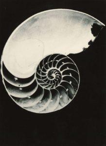 Nautilus Schnecken, Muscheln und andere Mollusken in der Fotografie