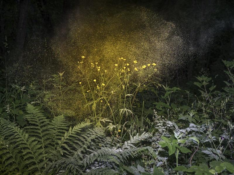 Luminous Matter I, 2019, 120 × 160 cm © Inka & Niclas
